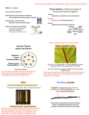 Slides-Lecture 06-Tissues (finished), Plants vs. Animals-6 slides per page
