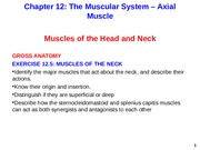 Axial Muscle Muscles of the Neck