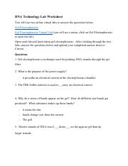 Gel Electrophoresis Worksheet.pdf - DNA Technology Lab ...