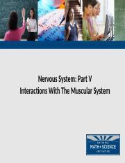 05 Nervous System Interaction with Muscular System_dr_rd_rm.pptm