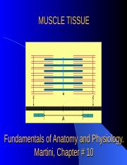 MUSCLE TISSUE-2