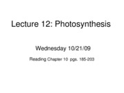 Lecture 12 Bio Photosynthesis