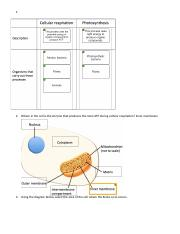 How cells release energy quiz ch 6.docx
