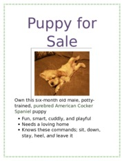 Lab 1-1 puppy for sale