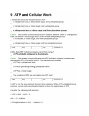 9-ATP and Cellular Work