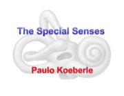 9_Special_Senses_and_Review_Koeberle