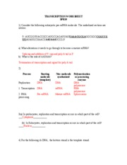 Printables Transcription And Translation Worksheet Answers transcription and translation worksheet1 with key worksheet