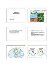 Lecture 12- Photosynthesis