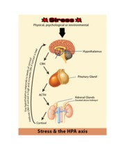 HPA Axis Key