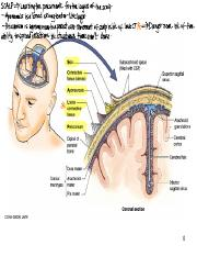 3.3 Scalp, Face, Temporal and Infratemporal Fossa.pdf