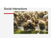 Lecture - Social Interactions