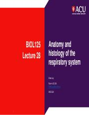 Lecture 28 Anatomy and histology of the respiratory system.pdf