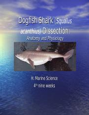 Dogfish.ppt