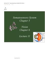 Lecture 11 - Somatosensory System & Vision.pdf
