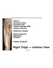 Right thigh anterior view muscles.jpg
