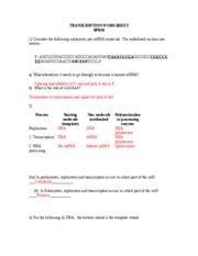 transcription and translation worksheet 1 with key transcription worksheet. Black Bedroom Furniture Sets. Home Design Ideas