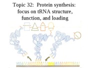 Topic 32, Protein synthesis