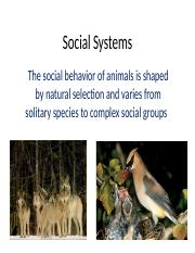 Ch 10 Social Structure