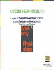 OpenStax_Anatomy_Physiology_CH20_ImageSlideshow.pptx