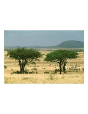 Serengeti savanna