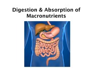 13. Digestion and Absorption_1