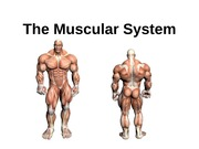 TheCompleteMuscular System