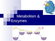 Enzymes_and_Signaling
