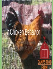 Chicken Behavior.pptx