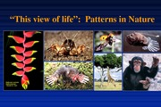 P10-Lecture 2- Patterns in Nature Jan_27