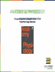 OpenStax_Anatomy_Physiology_CH23_ImageSlideshow.pptx