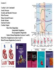 human phys Lecture 4 CC CO and HR 2017 WEB.ppt