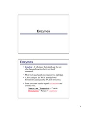 Section4_enzymes_09