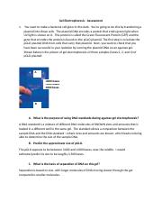 DNA Gel electrophoresis Assessment(1).docx