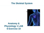 A&P I Lab 6 Appendicular Skeleton Exercise 10