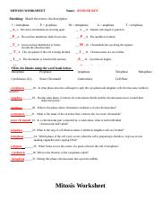 Mitosis Answers Key - MITOSIS WORKSHEET Name ANSWER KEY Matching ...