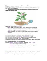 name three major types vascular plants and discuss each lo Chapter 36 transport in vascular plants vacuolated plant cells have three major apoplast are blocked by the casparian strip in the walls of each.