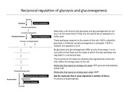 CHEM 3320 Regulation of glycolysis and gluconeogenesis