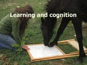 05+learning+and+cognition