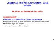 Axial Muscle Muscles of Facial Expression (1)