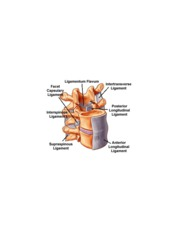 15_dp_ligaments