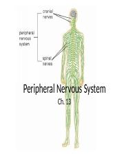 Peripheral Nervous System_upload-3.pptx