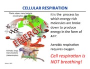 Oct 15_ Cellular Respiration _post.pdf