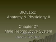 Chapter 27 - Male Reproductive System.ppt