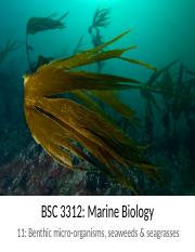 MB 10 ch 11 benthic microbes seaweeds seagrasses