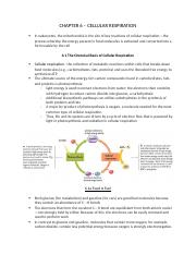 CHAPTER 6 – CELLULAR RESPIRATION.docx