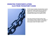 Biochem271s_Lecture24_Electron_Transport_Chain