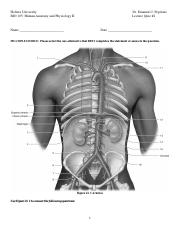 Hofstra_University_Human_Anatomy_and_Physiology_II_BIO_105_Lecture_Quiz_#2(1).pdf