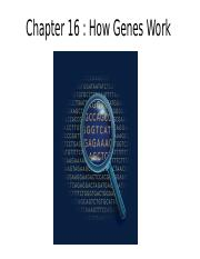 Chapter 16 How Genes Work.pptx
