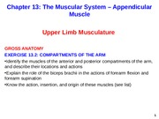 Appendicular Muscle Arm