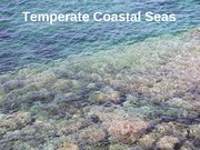 Temperate Coastal Seas